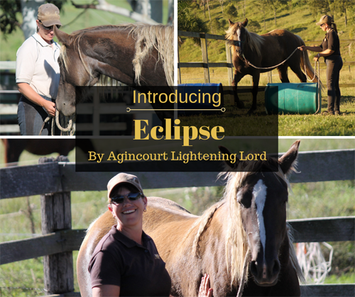 Introducing Eclipse!